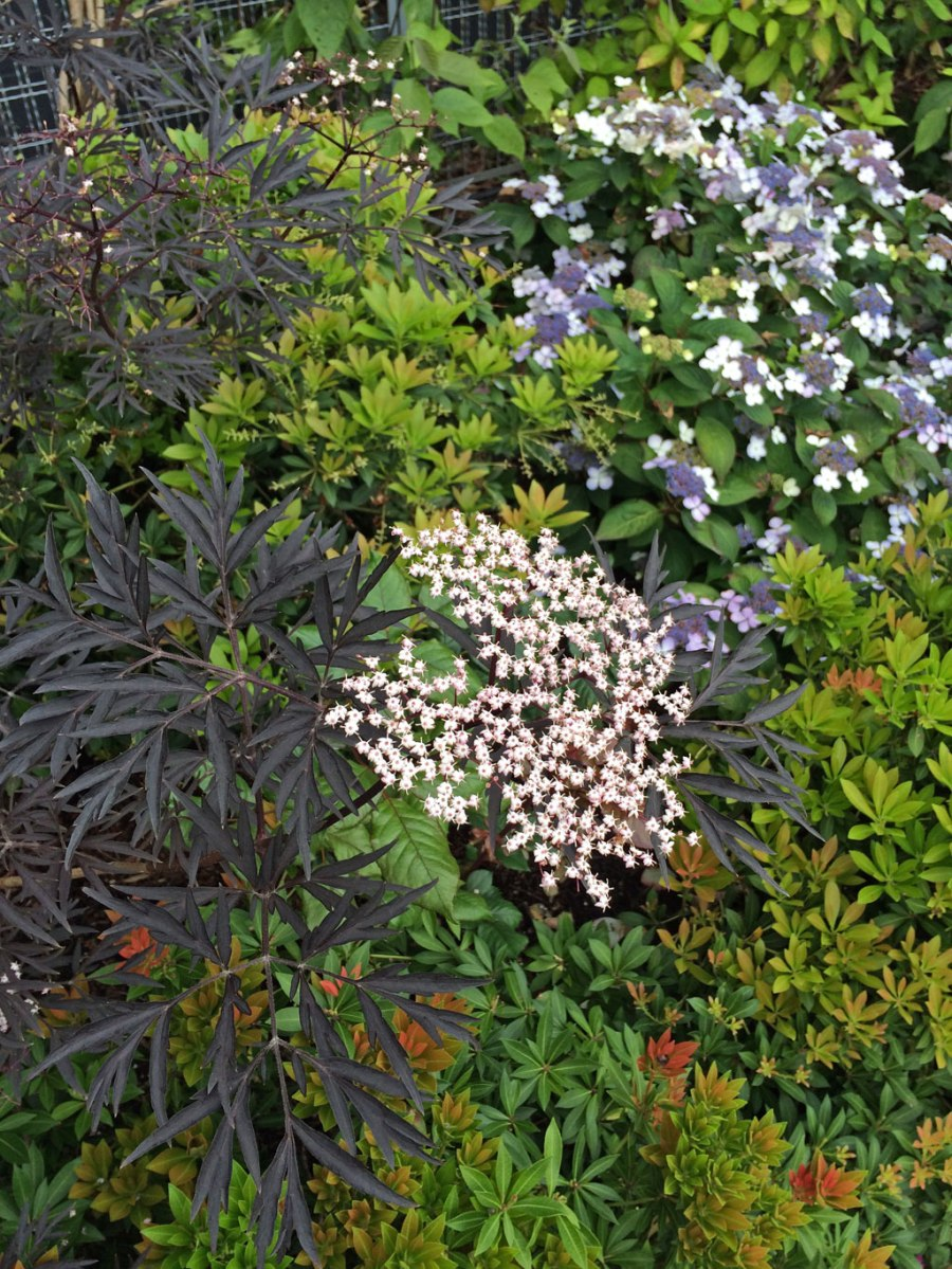 Tapestry Effect Plants