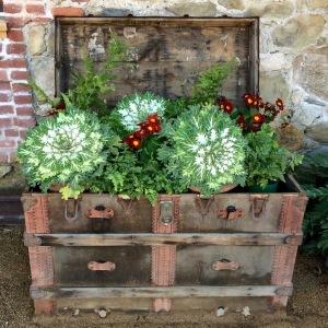 Treasure chest of plants