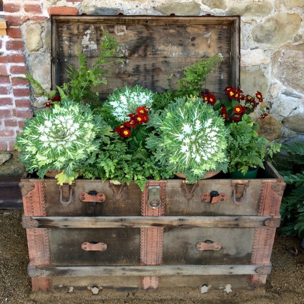 Treasure chest of plants