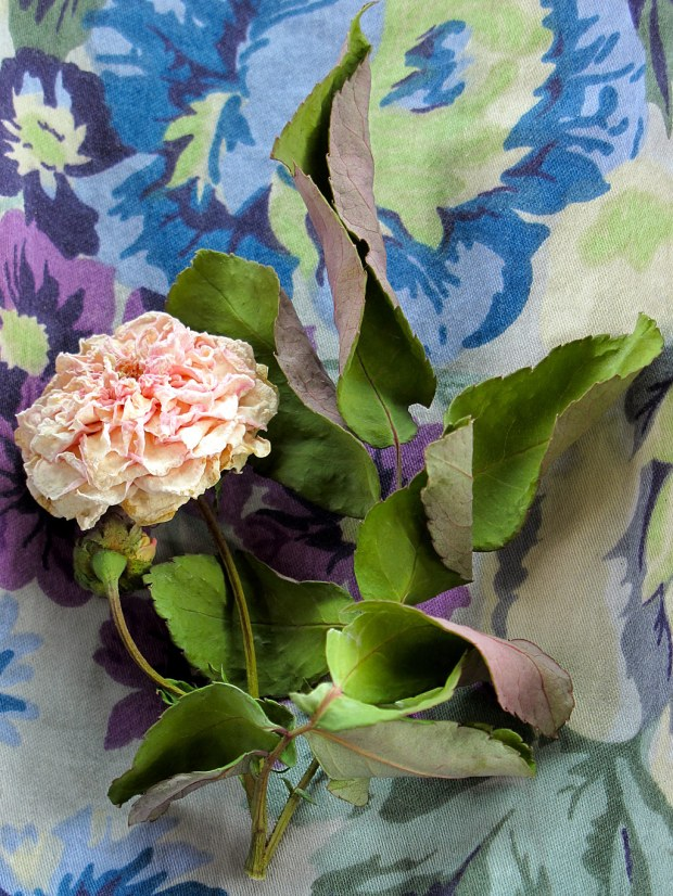 Floral fabric with faded rose