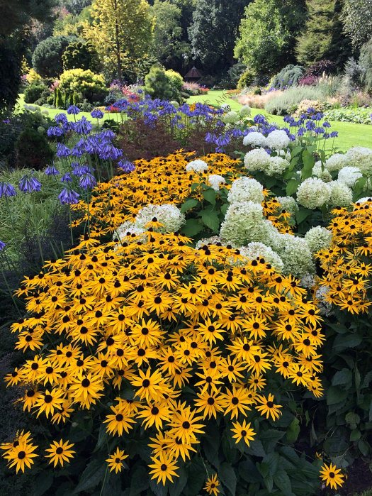 A border of flowers in full bloom