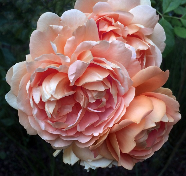 A digitally modified rose, turned orange