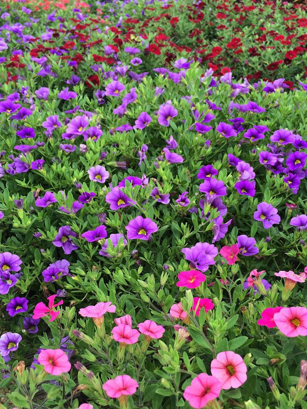 A mass of colourful flowers