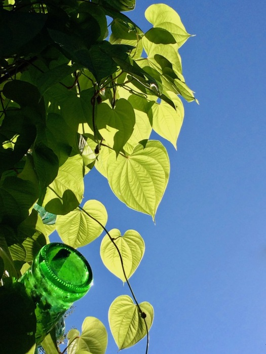 Green leaves against a blue sky