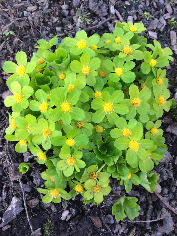 Green and yellow flowers