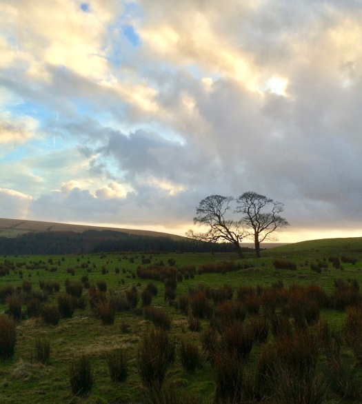 Moorland as night falls, with two trees