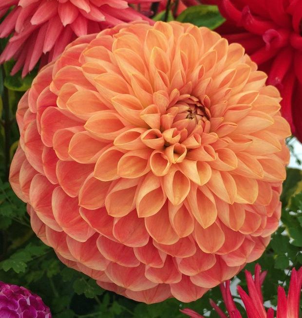 Round, orange flower
