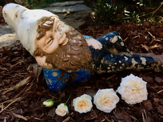 A rose in different stages with a gnome
