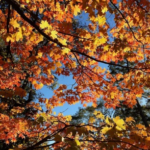 Golden and orange tree canopy