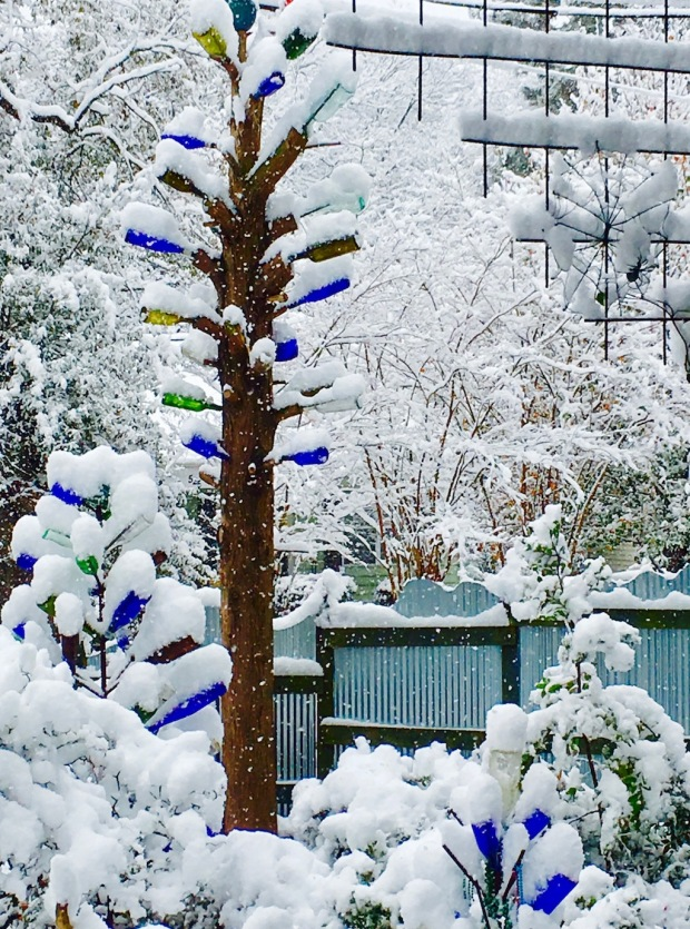 Three bottle trees covered in snow