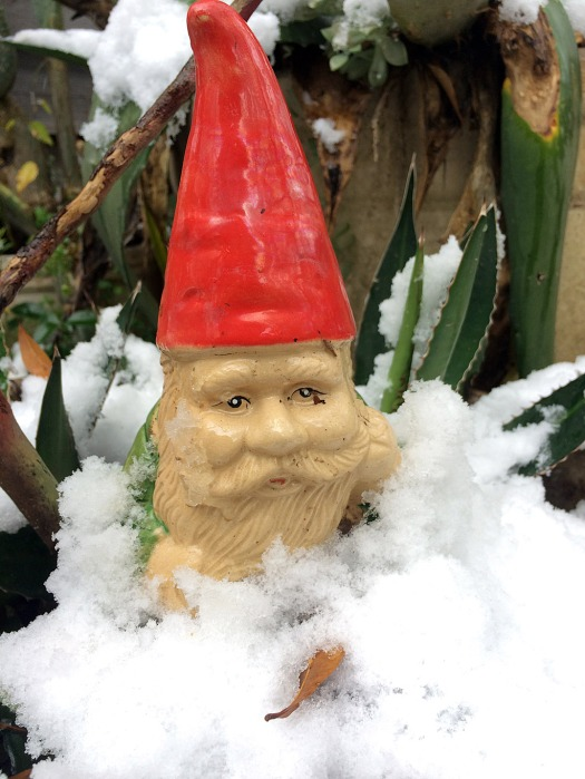 Gnome in snow up to the beard