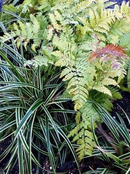 Stripey grass with ferns