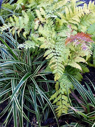 Stripey grass with ferns