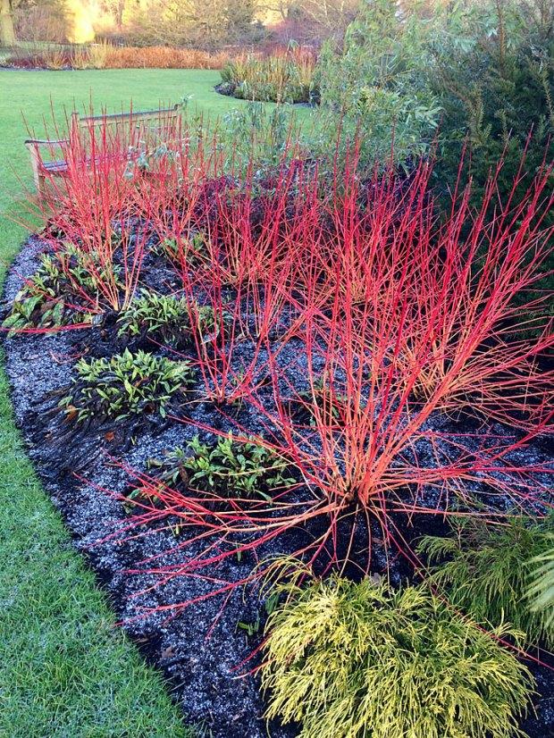 Colourful Winter Garden