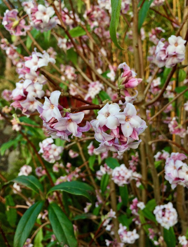 Shrub covered in small flowers