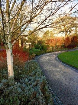 Path through a winter garden