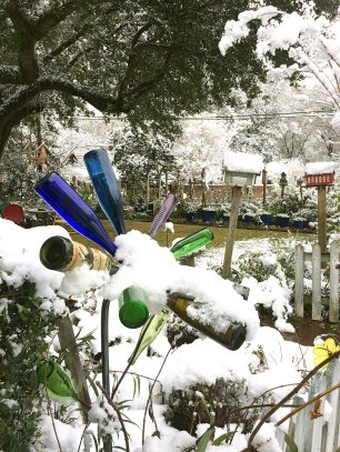 Bottle tree covered in snow