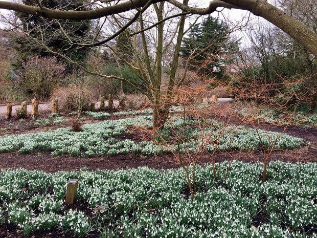 Paths laid out amongst snowdrops