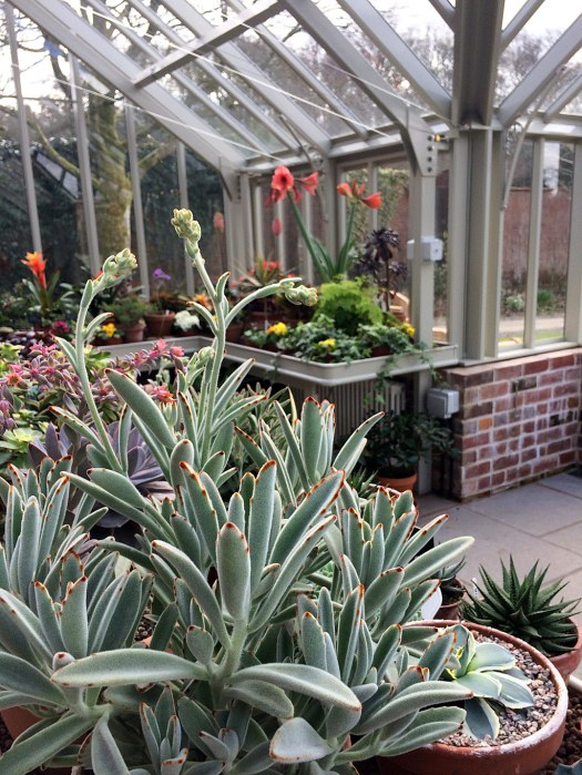 A traditional greenhouse packed with potted plants