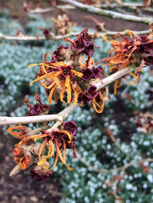Bare branches with orange flowers