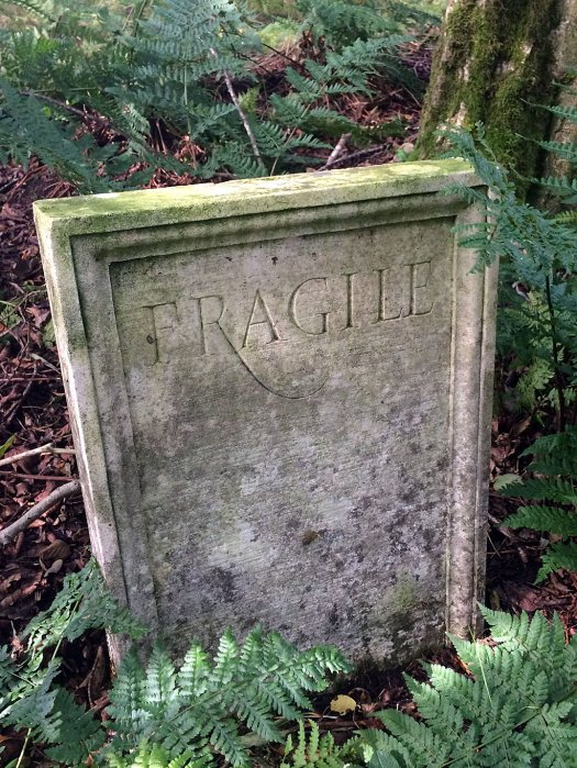Tombstone in the woods with Fragile inscribed on it