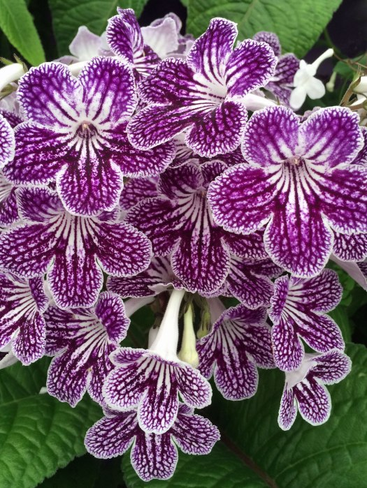 Flowers with stripes, edges and netting effects