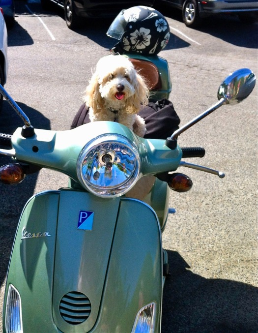 Cute dog on a Vespa scooter waiting for its owner