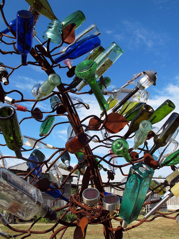 Close up of the bottle tree trunk, with branches and leaves