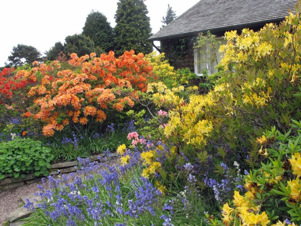 Yellow, apricot and blue cottage garden