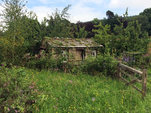 Cottage in a naturalistic garden of trees and wild flowers
