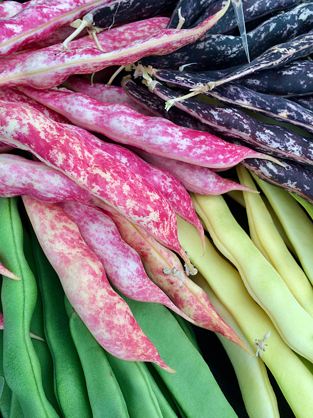 Red speckled, purple speckled, green and cream bean pods