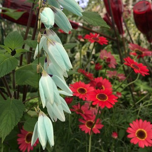 Pale turquoise flower in the foreground with red bottles and daisies