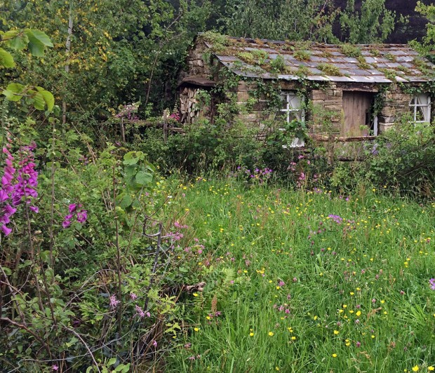 Foxgloves and wildflowers growing beside a cottage