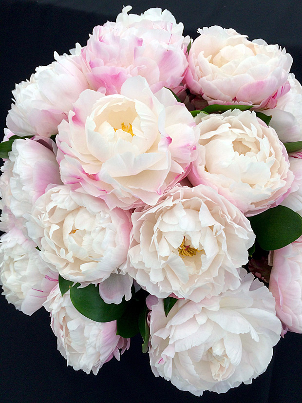 A ball-shaped display of white peony flowers