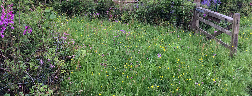 Gate leading into wildflower field with foxgloves