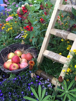 Ladder against an apple tree among flowers