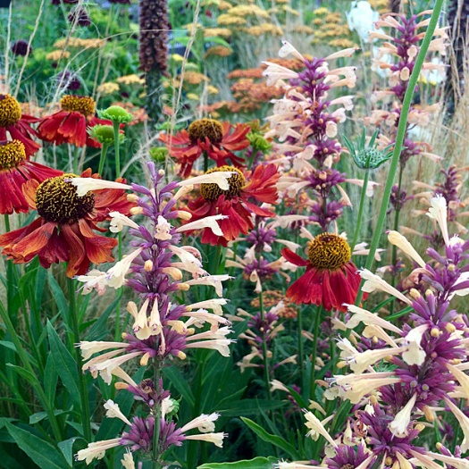 Flower combination F