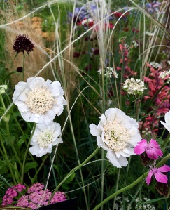 Cream flowers with arching grasses