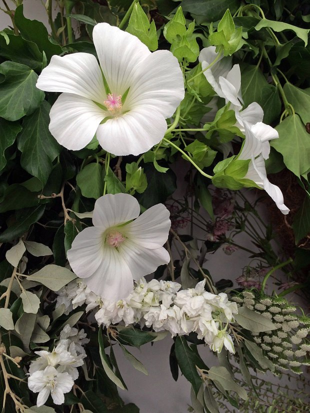 White mallow flowers