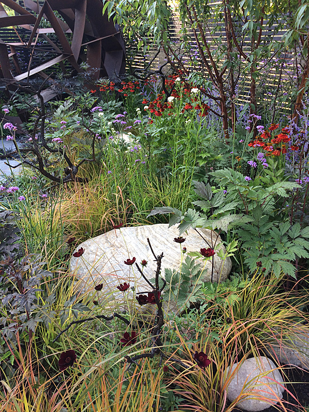 Rhs Hampton Court Flower Shows Twilight Zone Susan Rushton