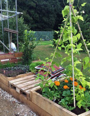 Raised beds growing beans, herbs and marigolds
