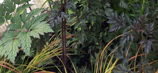 Dark foliage, green leaves and colourful grasses