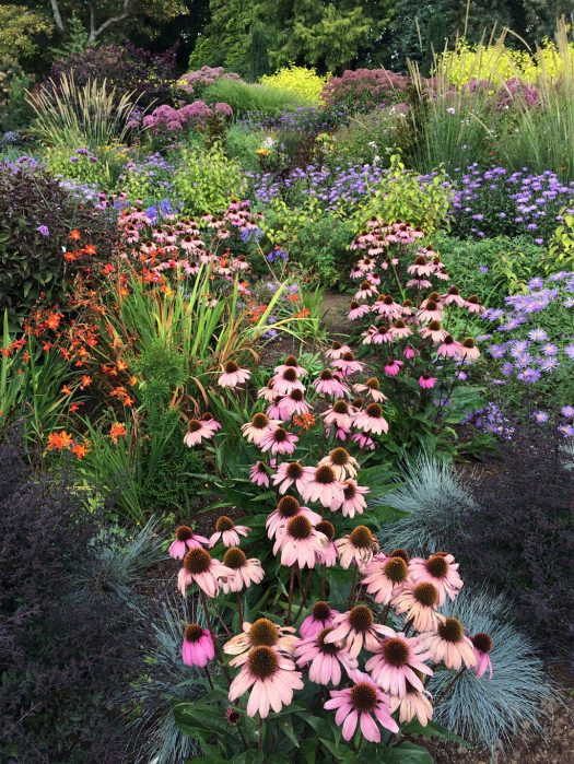 Echinaceas, asters, crocosmia and grasses