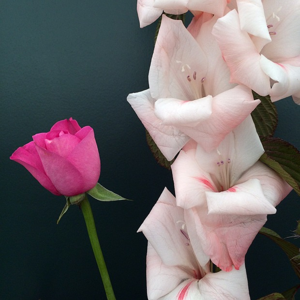 Rose bud looks insignificant next to gladioli flower