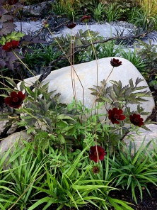 Foliage and flowers silhouetted against natural stone
