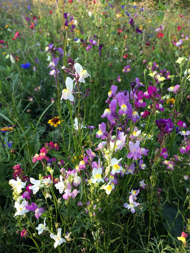 Colourful wildflowers