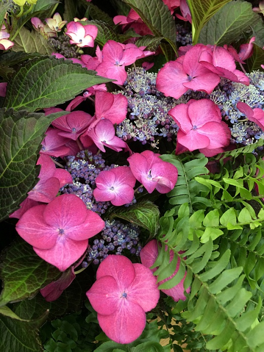 Hydrangea flower and foliage with a lime green fern