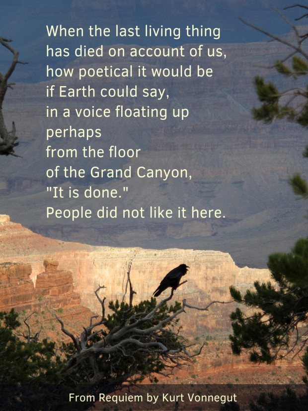 A bird on the edge of the Grand Canyon