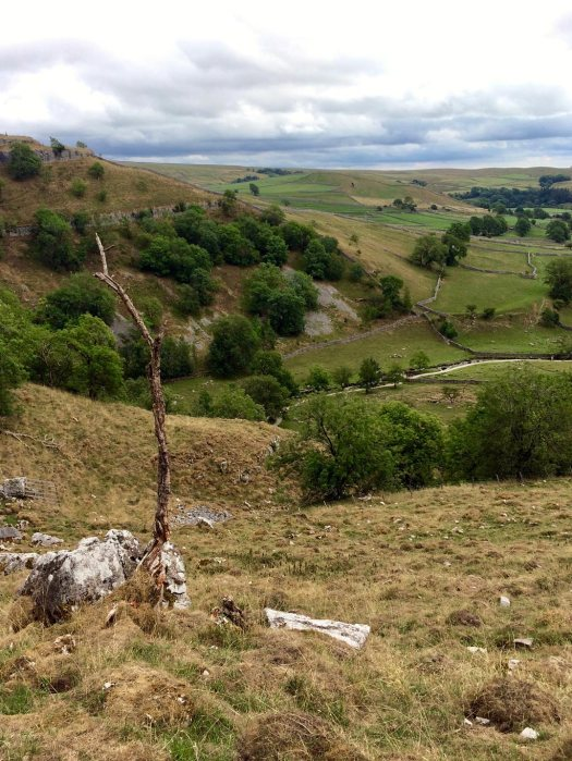View of moorland with a tree snag in the foreground