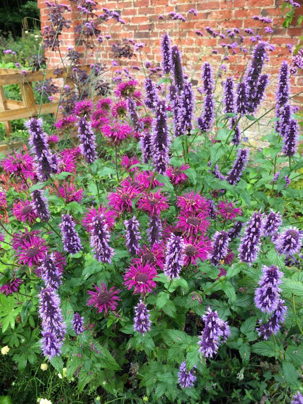 Scented herbs: hyssop, bergamot and vervain